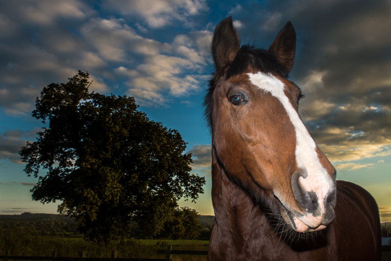 20131010-Kirsten-Horse-201