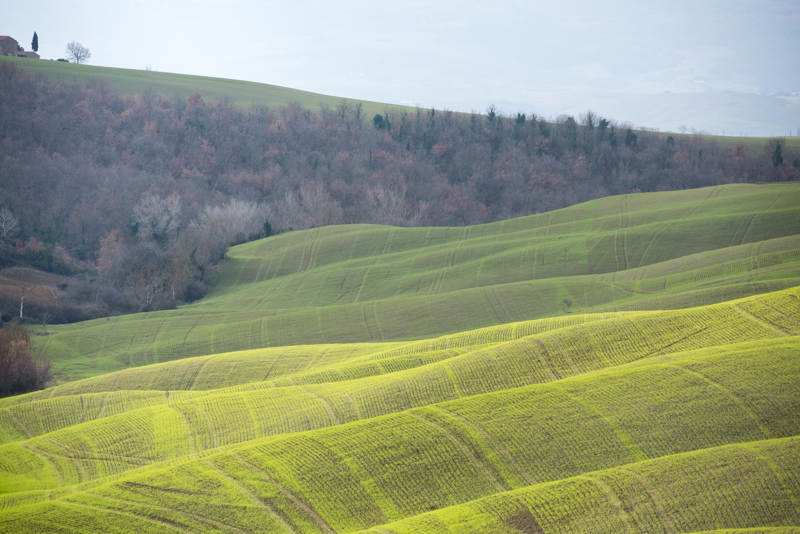 The road to Pienza
